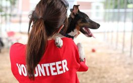 Animal rescue myth vs. fact: Humane societies are no-kill