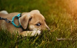 How to Find Good Foster Homes