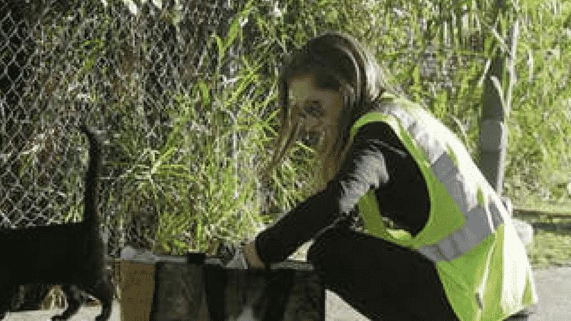Episode 12 – Tina Hoskins, Director of TNR