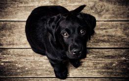 Top tips for creating an adoptive animal profile