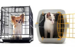 Import rescue animals into your state or save what's local? What's your take?
