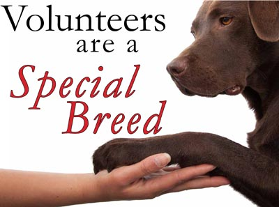 Biggest problems in Animal Rescue – 3) Attracting & Retaining volunteers