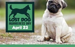 April 23 is Lost Dog Awareness Day