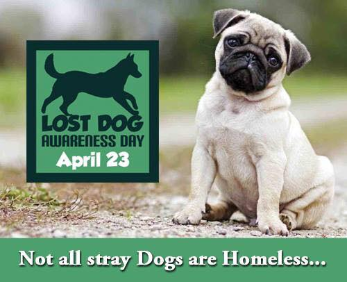 April 23 Is Lost Dog Awareness Day Is Your Dog Ready In Case They Go Lost Animal Rescue Professionals Association