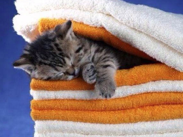 National Towel Day is today, May 25