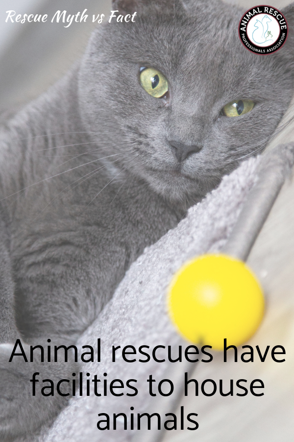 Animal rescues have facilities to house animals