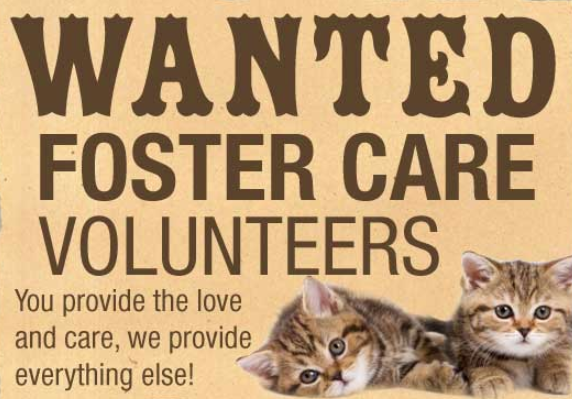 Foster volunteers