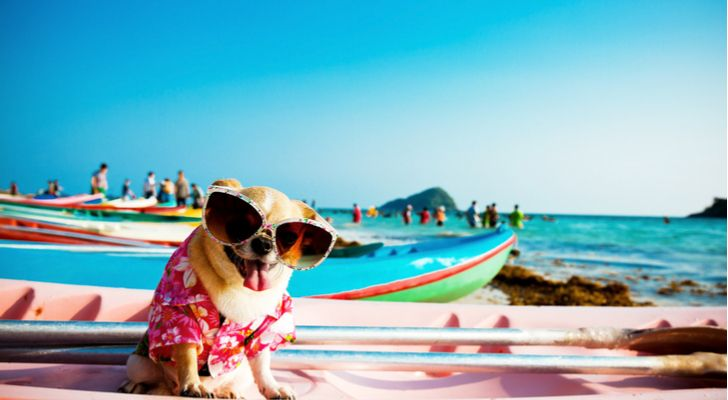 summer dogs, beach, sunglasses
