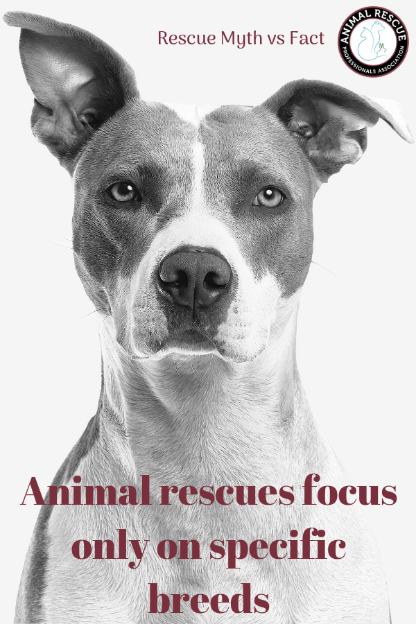 Animal rescues focus only on specific breeds