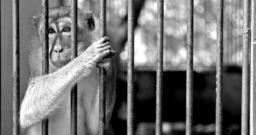 Unlocking the cage on animal experimentation