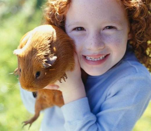 kid with guinea pig