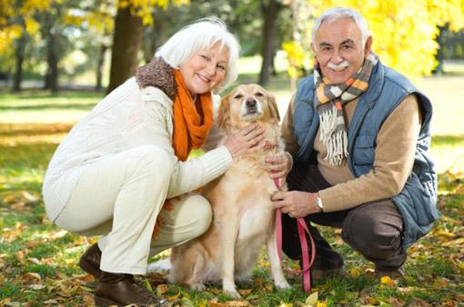 adult senior pets