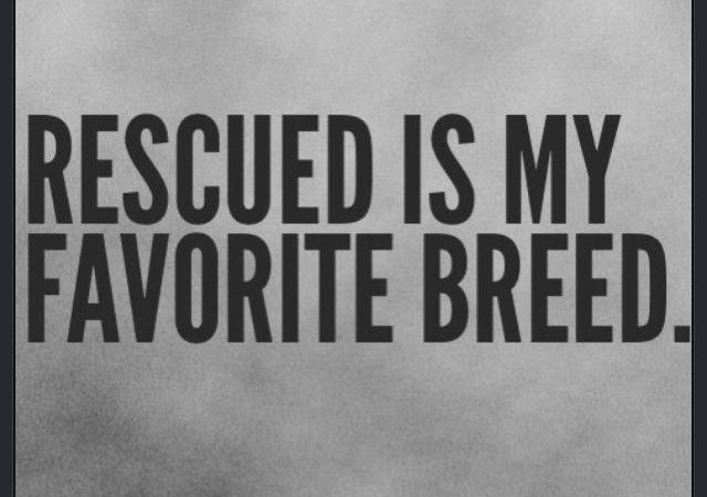 Rescue Myth vs. Fact: Animal rescues focus only on specific breeds