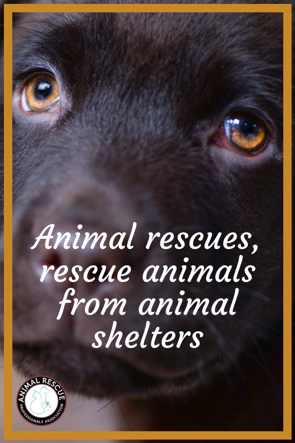 Animal rescues, rescue animals from animal shelters