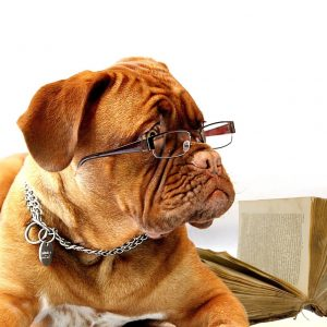 dog reading book with glasses on