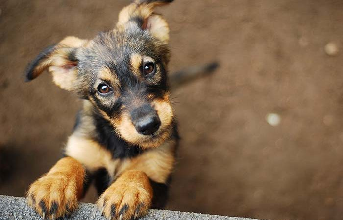 Rescue Myth vs. Fact: Animal Rescues, rescue animals from animal shelters