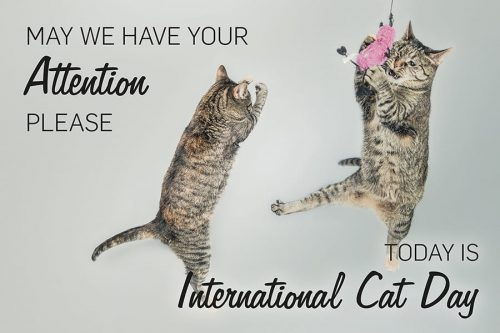 Yes that's right, another day for cats.  It's International Cat Day