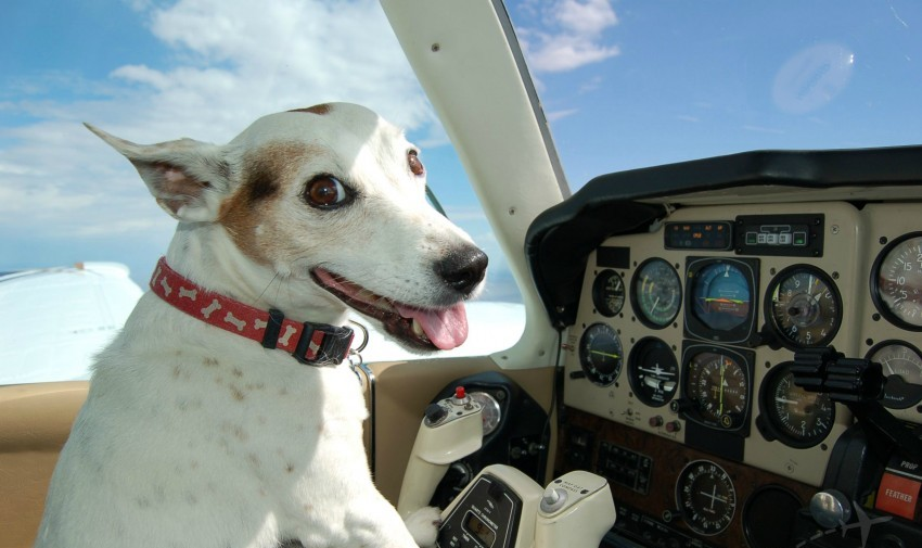 animal rescue transport, dog in plane
