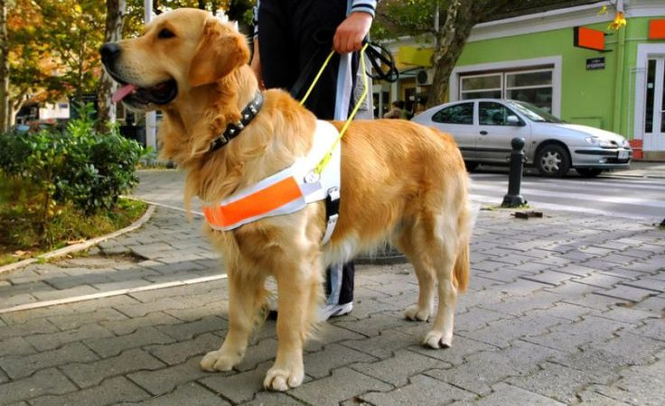 Assistance dogs – We at ARPA salute you on Assistance Dog Day