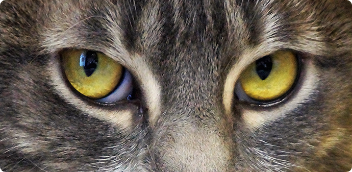 cat eyes, animal resuces
