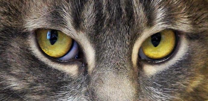 cat eyes, animal resuces