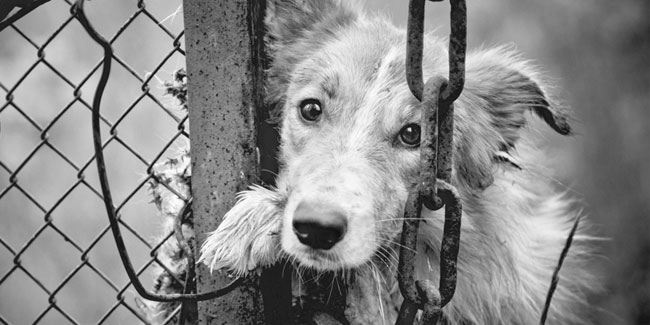 Your pet is thankful she has a home as unfortunately, many do not.