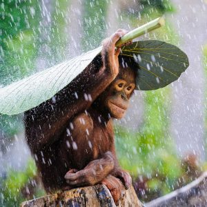 monkey taking cover in rain