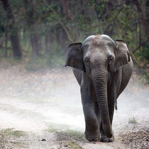 Elephant on dirt road