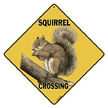 National Wildlife Day – Slow down; give a squirrel a break today!
