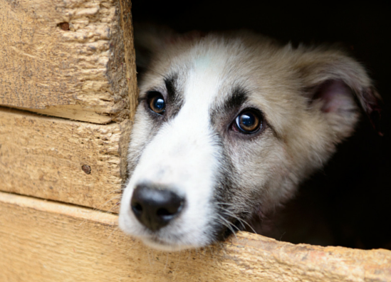 Rescue Myth vs. Fact: Animal rescues obtain their animals from breeders