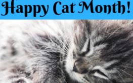 Time to snuggle in with your cats for happy cat month