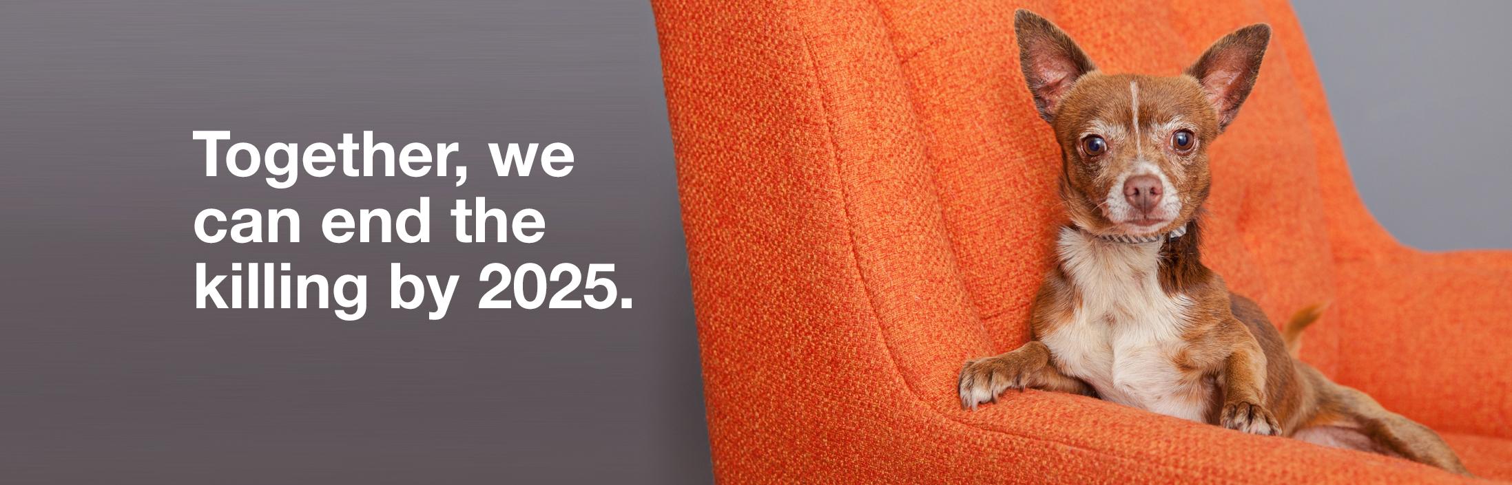 No-kill by 2025