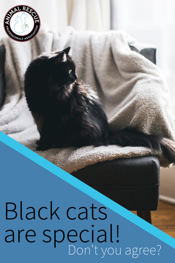 Black cats are special! Don't you agree_