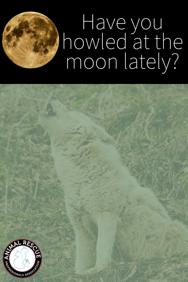 Have you howled at the moon lately_