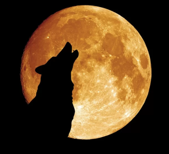 Yes I am howling at the moon.  Why aren't you?  It's national howl at the moon day!