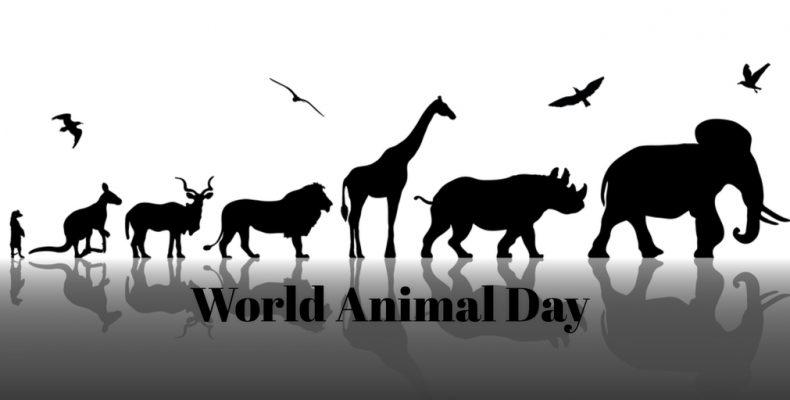 Today is World Animal Day, how will you celebrate?