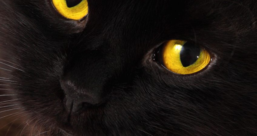 International Black Cat Awareness Month