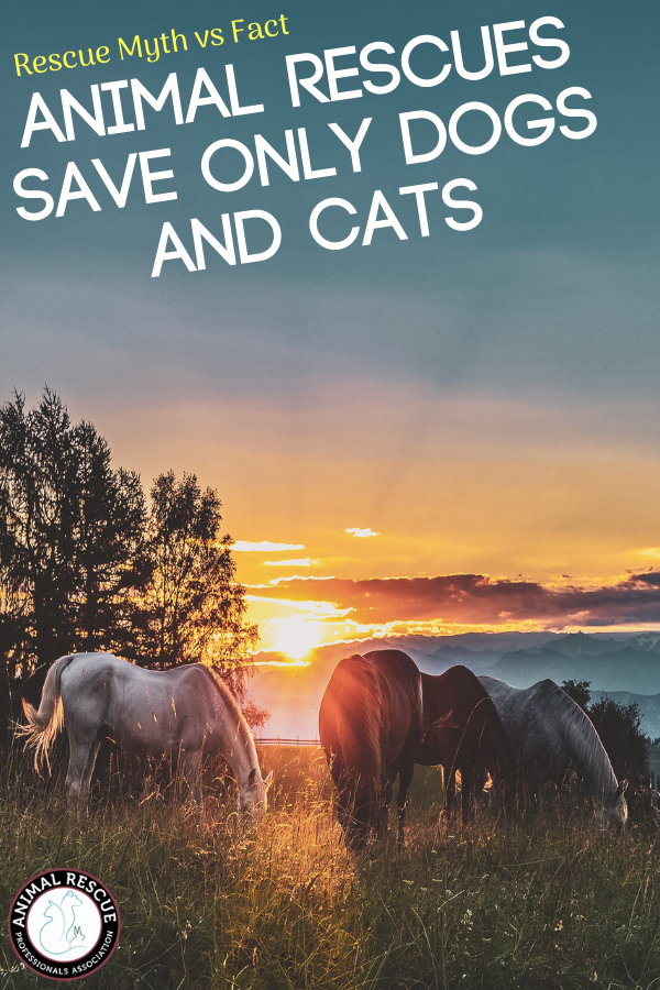 Animal Rescues save only dogs and cats
