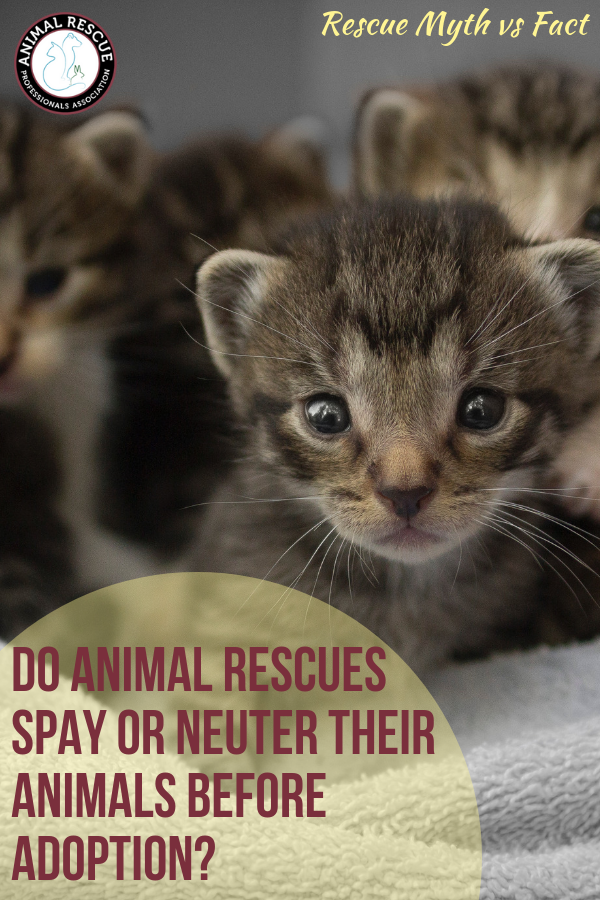 Animal rescues do not spay or neuter their animals before adoption