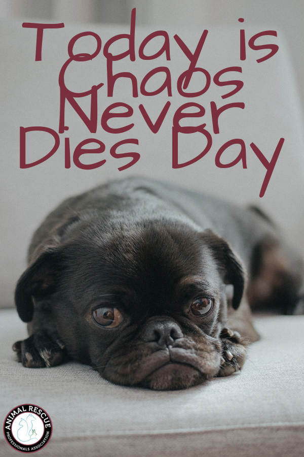 Chaos Never Dies Day