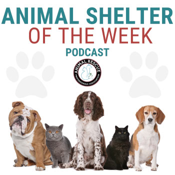 Animal Shelter of the Week