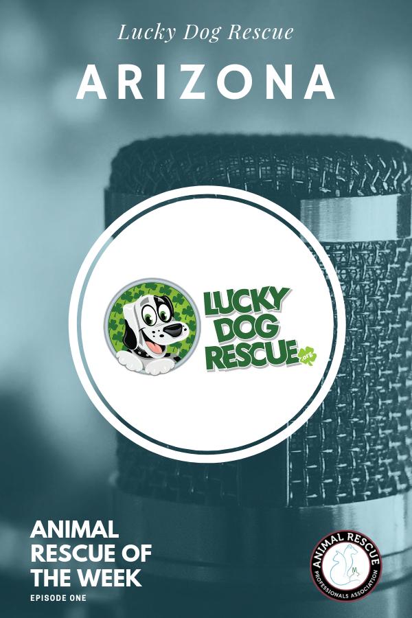 Lucky Dog Recue