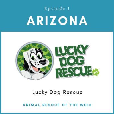 Animal Rescue of the Week: Episode 1 – Lucky Dog Rescue in Arizona