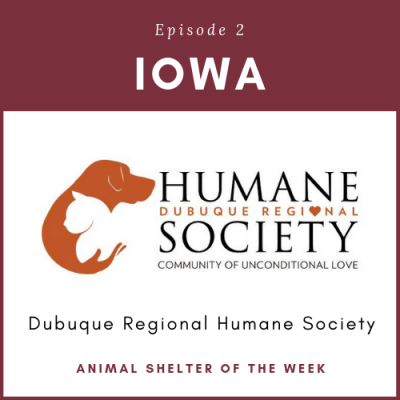Animal Shelter of the Week: Episode 2 – Dubuque Regional Humane Society in Iowa