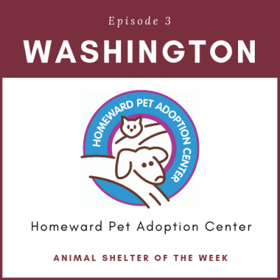 Animal Shelter of the Week: Episode 3 – Homeward Pet Adoption Center in Washington