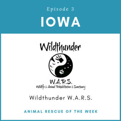Animal Rescue of the Week: Episode 3 – Wildthunder W.A.R.S in Iowa