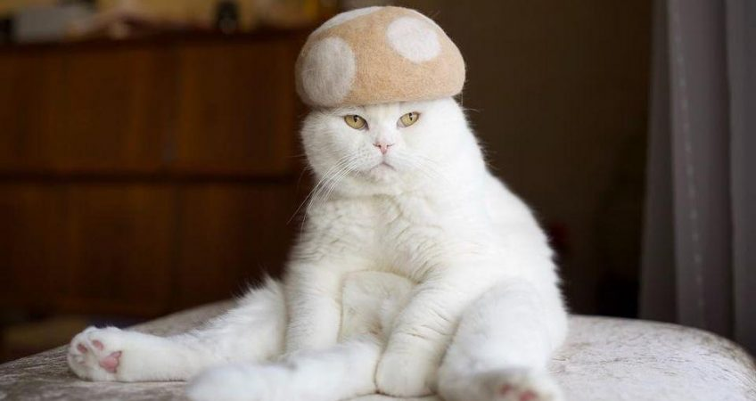 National dress up your pet day is here – Time for cat hats!