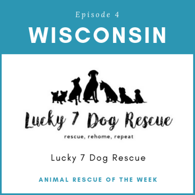 Animal Rescue of the Week: Episode 4 – Lucky 7 Dog Rescue in Wisconsin