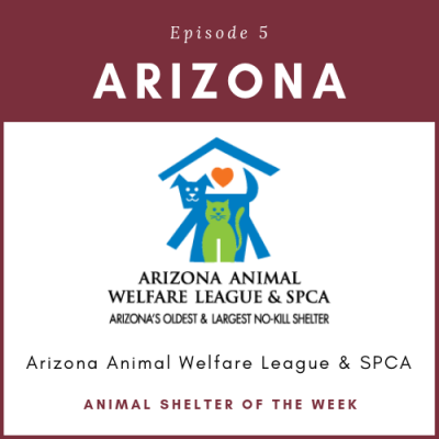 Animal Shelter of the Week: Episode 5 – Arizona Animal Welfare League in Arizona