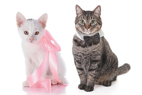 Female cats tend to be right pawed, while male cats are more often left pawed